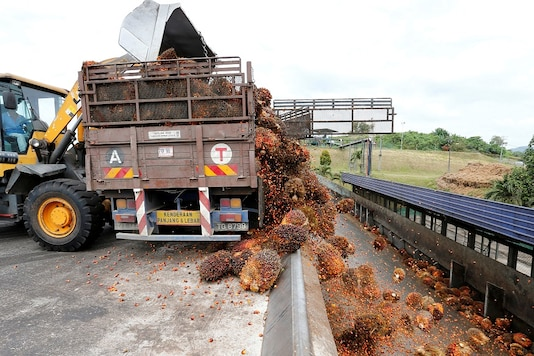 A worker unloads palm oil fruit bunches from a lorry inside a palm oil mill in Bahau, Negeri Sembilan, Malaysia   (Image: REUTERS)