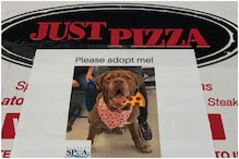 New York Pizza Chain is Putting Photos of Adorable Dogs on Food Boxes to Promote Adoption