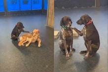 TikTok Video of Thoughtful Doggo Petting and Comforting Her Friends at Daycare is All of Us