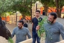 Salman Khan Eating Animal Fodder as He Feeds His Horse is a Strange Sight, Watch Video