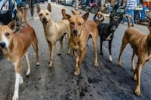 Hyderabad Students Turn Lifesavers for Campus Strays and Wildlife Amid Lockdown