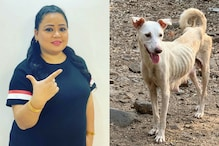 NGO Responds to Bharti Singh's Appeal Of Feeding Stray Dogs