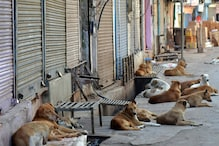 Dishing It Out: 2 Friends in Chhattisgarh Have Become Benefactors for Stray Animals during Covid-19 Lockdown