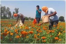 Hit Hard By COVID-19 Lockdown Flower Farmers in J&K Demand Loan Waiver