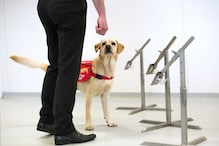 Here's How Dogs Can Help Sniff Out Asymptomatic Coronavirus Patients