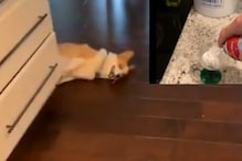 WATCH: Dog's Hilarious Reaction to a Can of Whipped Cream Being Opened is Pure Gold