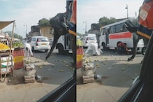 WATCH: TikTok Video of an Elephant Sneakily Stealing Fruits Scattered on the Road Goes Viral