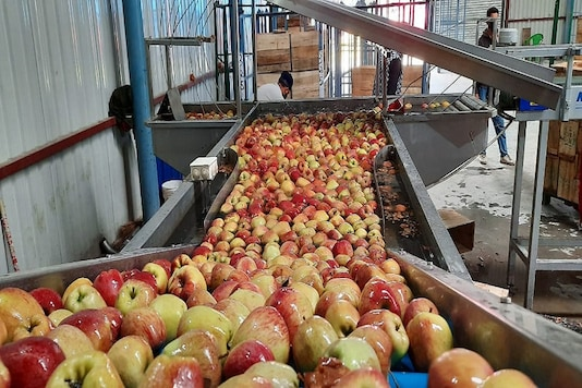 Apples seen at the cold storage center.  (Image: Qayoom Khan)