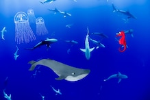 As Humans Stay Off the Waters, Aquatic Life is Booming in Absence of Underwater Noise Pollution