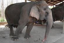 As Coronavirus Crisis Worsens, Thailand's Tourist Elephants Face Starvation