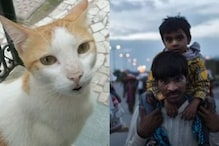 WATCH: This Cat Has an Open Letter to Humans on The Migrant Crisis in India