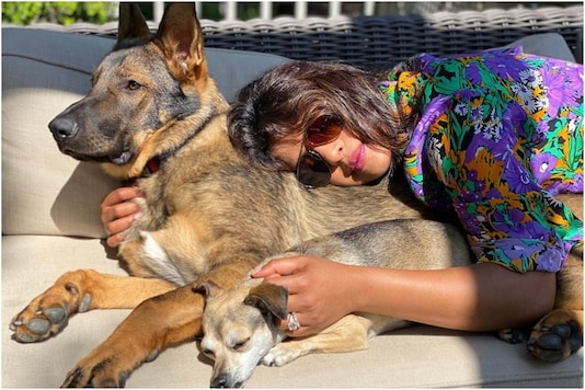 Priyanka Chopra's New Pic Proves That 'Sunshine is Better with Cuddles'