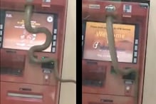 WATCH: Video of Snake Slithering Inside a Ghaziabad ATM Has 'Rattled' the Internet
