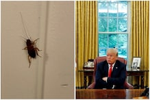 'I'll Vote for it': Roach Turns into Overnight Celebrity after Being Clicked Inside White House