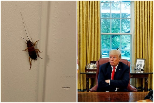 A cockroach was spotted inside the White House | Image credit: Twitter/Reuters