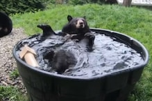 Watch: Video of a 'Cute' Bear Chilling in Water Tub is Giving Us Summer Goals