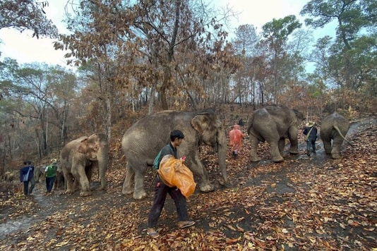 Hundreds of Thai Elephants, Out of Work due to Covid-19, Are Walking 150 Kms Back Home