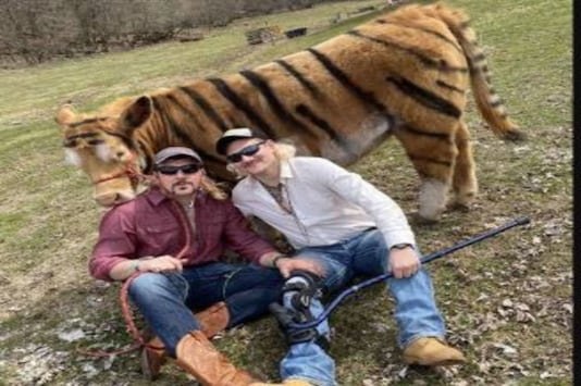 US Farmers Paint their Cow as Big Cat to Recreate Joe Exotic's 'Tiger King' Photos