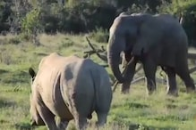 Wild Face-off: Elephant Chases Away Rhino With a Tree Branch