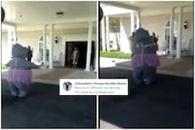 Woman Dresses up in Hippo Costume to Hug Elderly Mother in US Old Age Home amid Covid-19