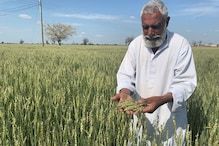 How Extreme Weather Conditions and Growing Population Drive Pakistan Toward a Wheat Crisis