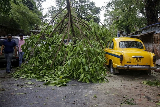 People walk past a tree branch fallen in the middle of a road after Cyclone Amphan hit the region in Kolkata. (Image: AP)