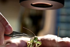 Russian Artist Stitches Masks for Insects to 'Protect' them from Coronavirus Pandemic