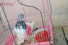 Suspected 'Spy' Pigeon From Pakistan Captured Along International Border in Jammu & Kashmir