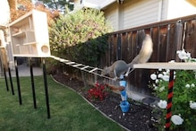 Ex-NASA Engineer Devises a Way to Stop Squirrels from Finishing up Food, But This Happens