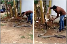Video of Man Giving 'Bath' to King Cobra Has Left Twitter Hissing With Shock
