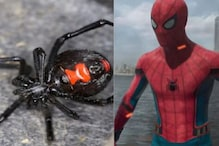 Three Brothers Get Themselves Bitten by Black Widow in a Dream to Become Spiderman