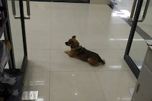 Dog Waited for 3 Months Outside Wuhan Hospital Where its Owner Died of Coronavirus