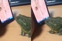 Watch: This Frog Playing Ant Smasher on Smartphone is the Most Hilarious Thing on Internet