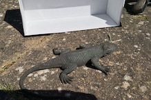 Officer Receives Call to Rescue 'Unresponsive Lizard' and Then This Happens