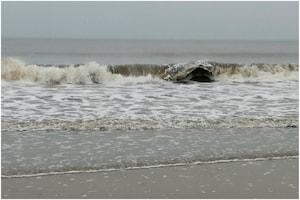 Cyclone Nisarga: Maharashtra, Gujarat Brace for Severe Storm