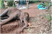 'Inhumane and Unacceptable': Akshay Kumar, Virat Kohli Mourn Pregnant Elephant's Death