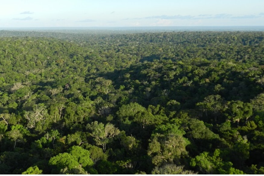 World Environment Day 2020: The World's Largest Forests, and How They're Rapidly Vanishing