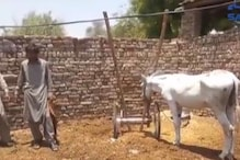A Donkey Has Been Arrested in Pakistan Because it Participated in a 'Gambling Race'
