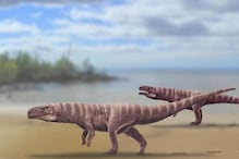 Prehistoric Crocodiles Probably Walked on Two Legs, Finds New Study