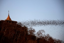 Reseachers in Thailand Test Horseshoe Bats for Coronavirus amid Concerns over Threat to Locals
