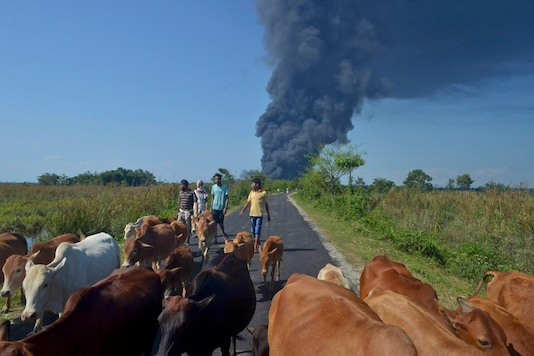 People walk behind cattle, as smoke rises after the natural gas well of Oil India Limited (OIL) caught fire at Baghjan, Tinsukia district in the northeastern Indian state of Assam, Tuesday, June 9, 2020. (AP Photo/Partha Sarothi Das)