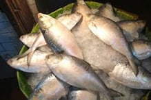 Pleasant Surprise: 'Hilsa' Boom amid Covid-19 Gloom in Bengal
