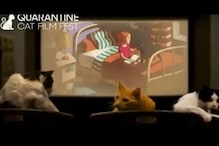 This Quarantine Cat Film Festival Aims to Raise Funds for Independent Theatres Hit by Pandemic