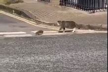 Real-life Tom and Jerry Spotted: Video of a Cat Stealthily Following a Rat Goes Viral