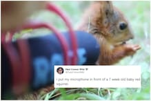 Woman Records Sound of 7-Week-Old Squirrel Eating and Twitter Can't Believe its Ears