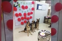 Mumbai Police Celebrating the First Birthday of Its Dog Cops is the Pawsome Content We Need