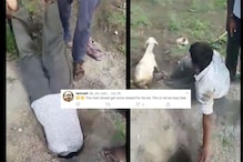 Netizens Demand Reward for Man Rescuing a Goat from Pit in 'Desi Style'