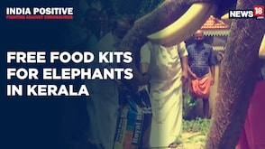 India Positive: Kerala Govt Provides Free Food Kits To Captive Elephants