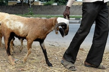 PETA Wants to Stop the Sacrifice of Goats Ahead of Bakra Eid 2020