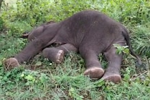 5-year-old Elephant Found with Mouth Injuries in Kerala Reserve Forest Dies